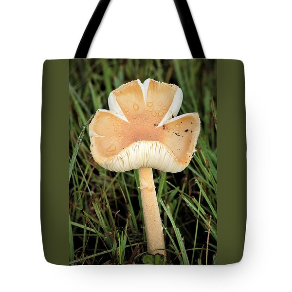 Tote Bag featuring the photograph Blooming Mushroom by Sheila Brown