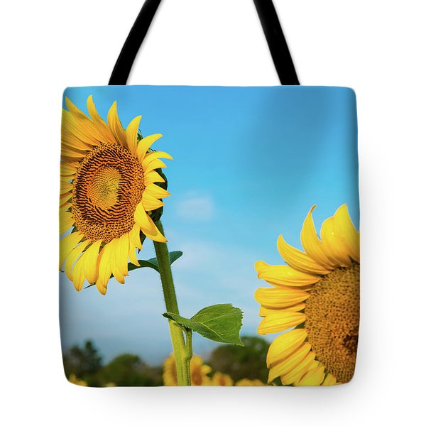 Tote Bag featuring the photograph Blooming Sunflower In Blue Sky by Dennis Dame