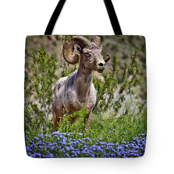 Blooms And Bighorn In Anza Borrego Desert State Park  Tote Bag