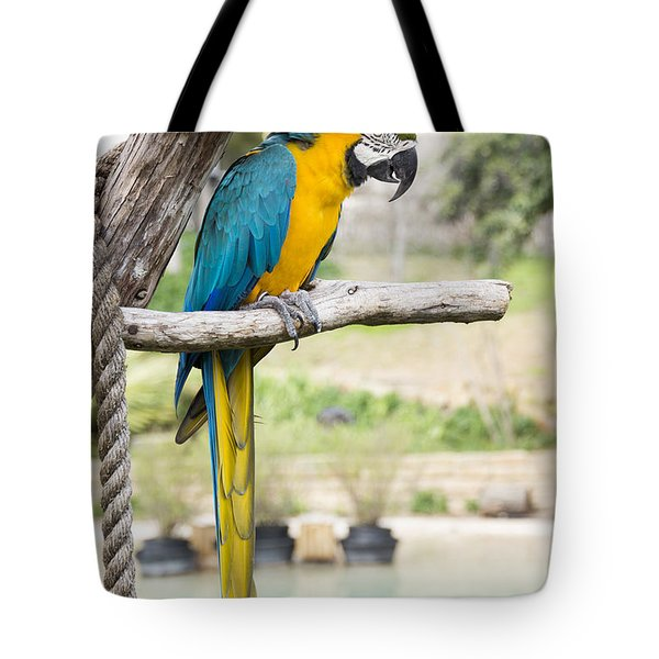 Blue And Gold Macaw Tote Bag