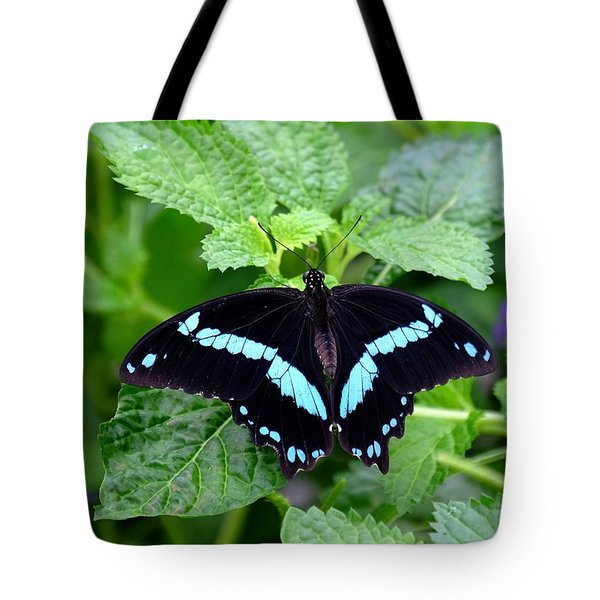 Blue Banded Swallowtail Butterfly Tote Bag