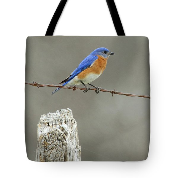 Blue Bird On Barbed Wire Tote Bag by Robert Frederick