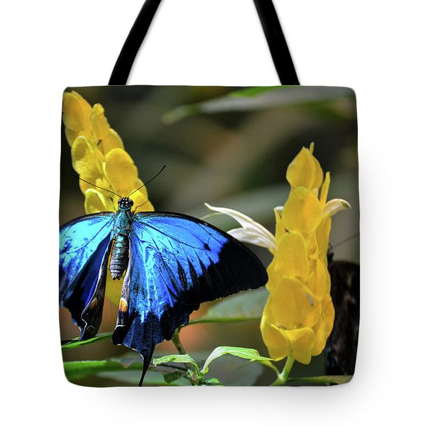 Blue Beauty Butterfly Tote Bag