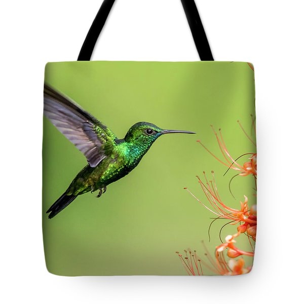 Tote Bag featuring the photograph Blue Chinned Sapphire by Rachel Lee Young