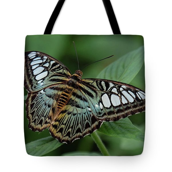 Blue Clipper Butterfly Open Tote Bag