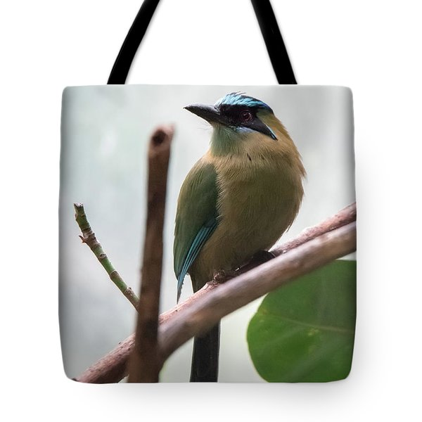 Blue-crowned Motmot Tote Bag