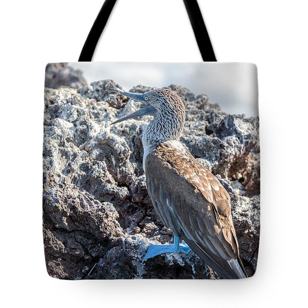 Blue Footed Booby Tote Bag by Jess Kraft