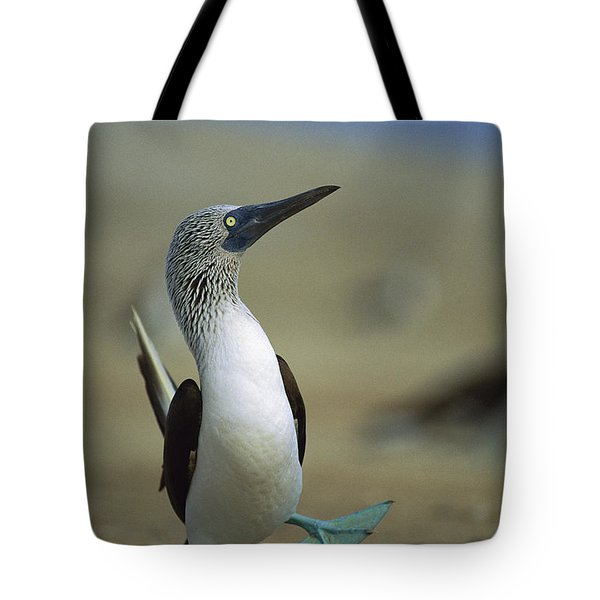 Tote Bag featuring the photograph Blue-footed Booby Sula Nebouxii by Tui De Roy