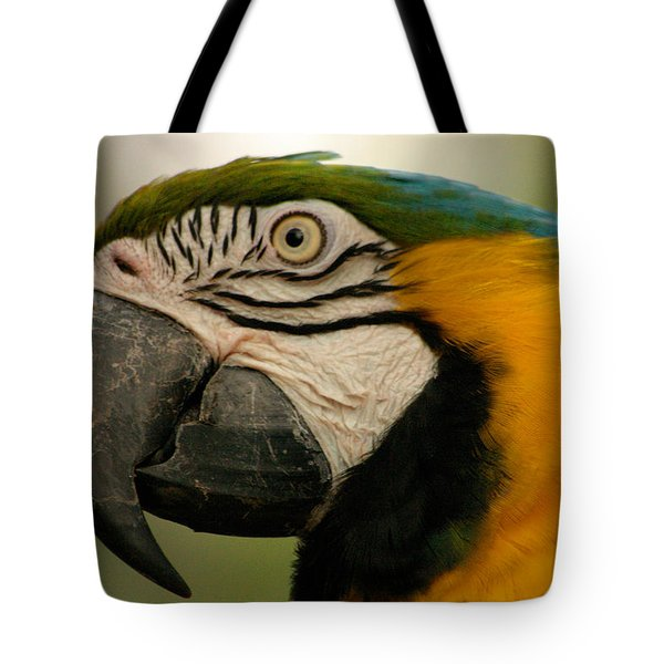 Blue Gold Macaw South America Tote Bag by Ralph A  Ledergerber-Photography