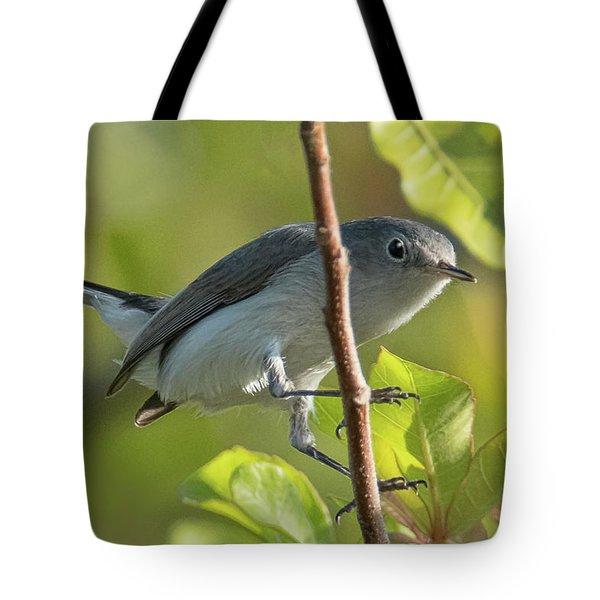 Blue Gray Gnatcatcher Tote Bag