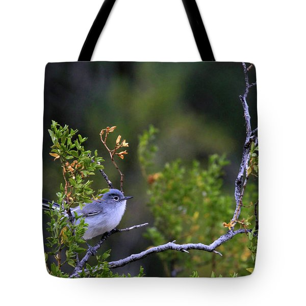 Blue-gray Gnatcatcher  Tote Bag