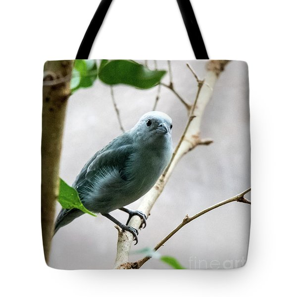 Blue-grey Tanager 2 Tote Bag