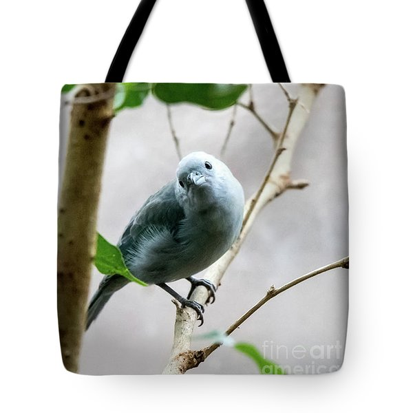 Blue-grey Tanager Tote Bag
