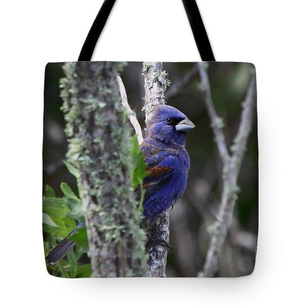 Blue Grosbeak In A Mangrove Tote Bag