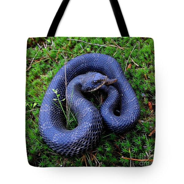 Blue Hognose Tote Bag