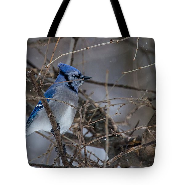 Tote Bag featuring the photograph Blue Jay by Dan Traun