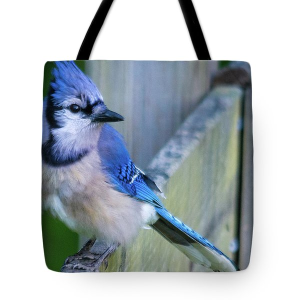 Blue Jay Fluffed Tote Bag