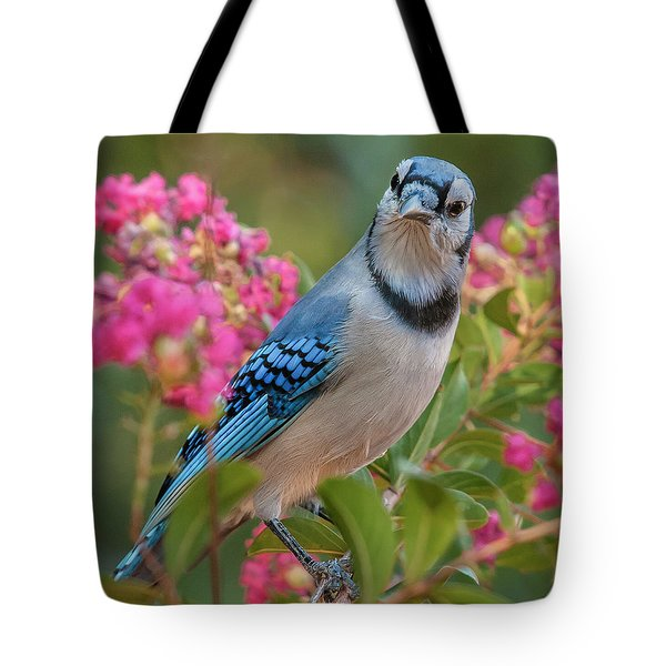 Blue Jay In Crepe Myrtle Tote Bag by Jim Moore
