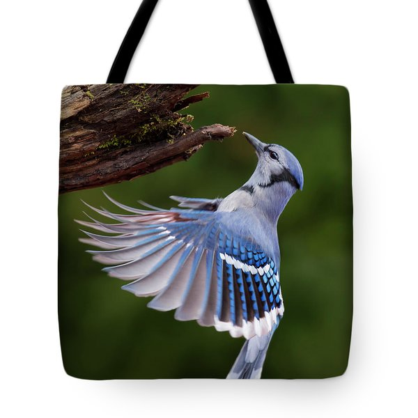 Tote Bag featuring the photograph Blue Jay In Flight by Mircea Costina Photography