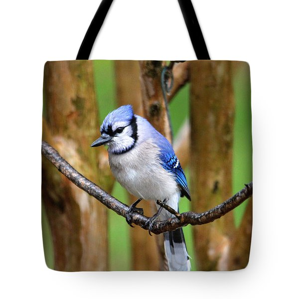 Blue Jay On A Branch Tote Bag