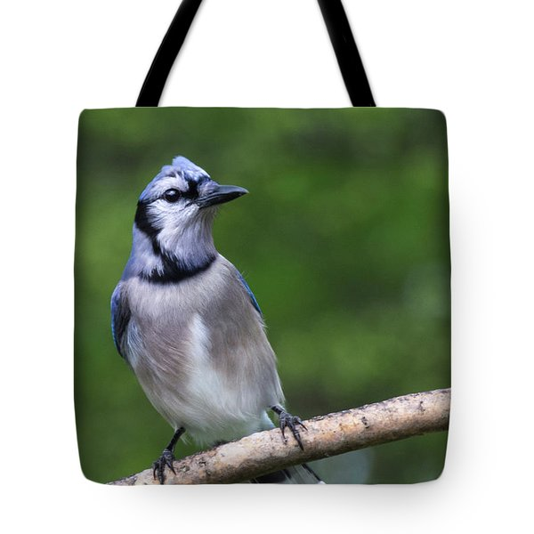 Blue Jay On Alert Tote Bag