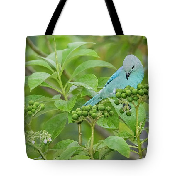 Tote Bag featuring the photograph Blue Jean Baby by Rachel Lee Young