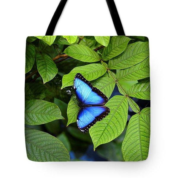 Blue Leaves - Morpho Butterfly Tote Bag