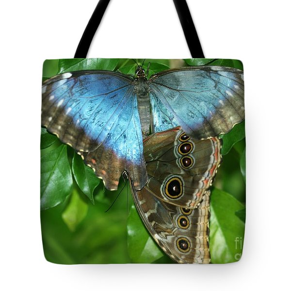 Blue Morpho Butterflies Tote Bag by Sabrina L Ryan
