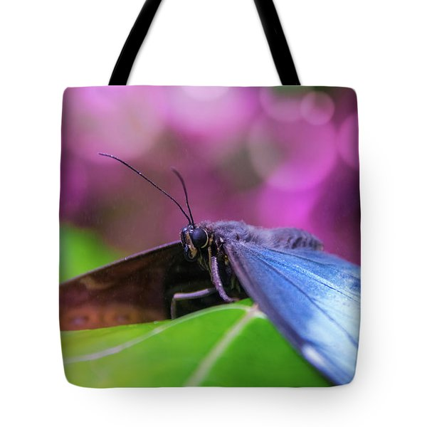 Blue Morpho  Butterfly 2 Tote Bag