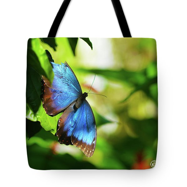 Tote Bag featuring the photograph Blue Morpho Butterfly by Sally Sperry