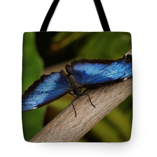 Blue Morpho Butterfly Tote Bag by Sandy Keeton