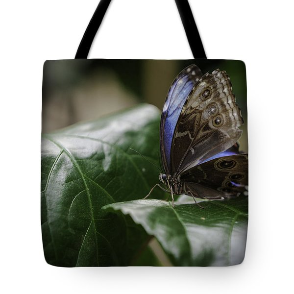 Blue Morpho On A Leaf Tote Bag by Jason Moynihan