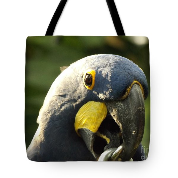 Blue Parrot Tote Bag by Erick Schmidt