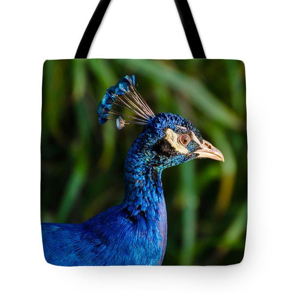 Blue Peacock Tote Bag by Daniel Precht