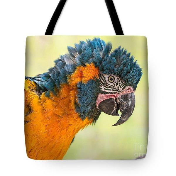 Blue Throated Macaw Tote Bag