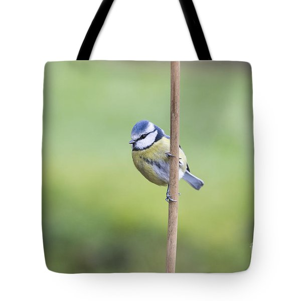 Blue Tit On A Garden Cane Tote Bag