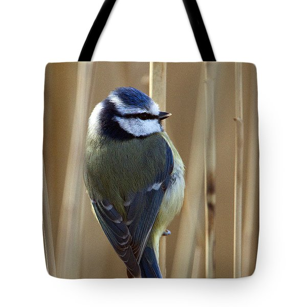 Blue Tit On Reed Tote Bag