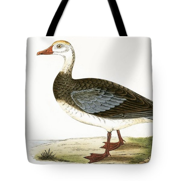 Blue Winged Goose Tote Bag by English School