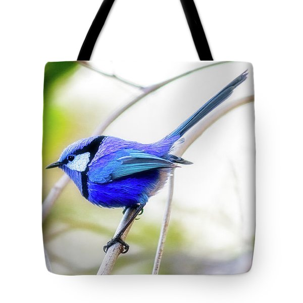 Tote Bag featuring the photograph Blue Wren, Margaret River by Dave Catley