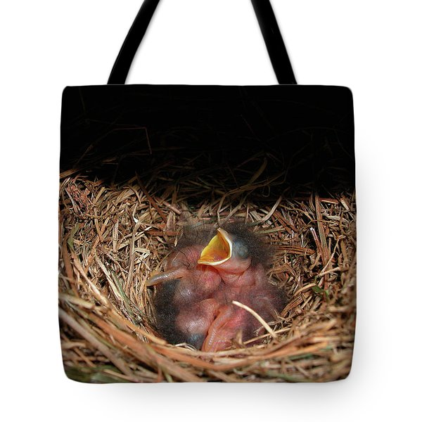 Tote Bag featuring the photograph Bluebird Babies by Marie Hicks