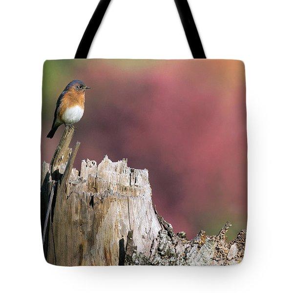 Bluebird Fall Perch Tote Bag