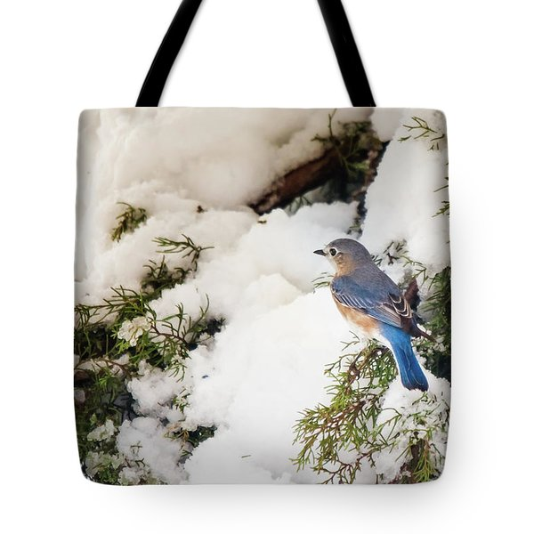 Tote Bag featuring the photograph Bluebird On Snow-laden Cedar by Robert Frederick