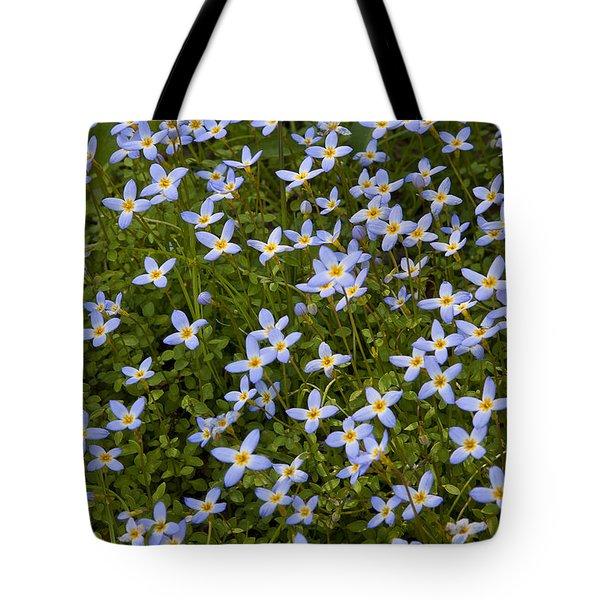 Bluets Tote Bag