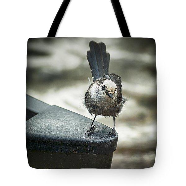 Boat Sparrow Tote Bag