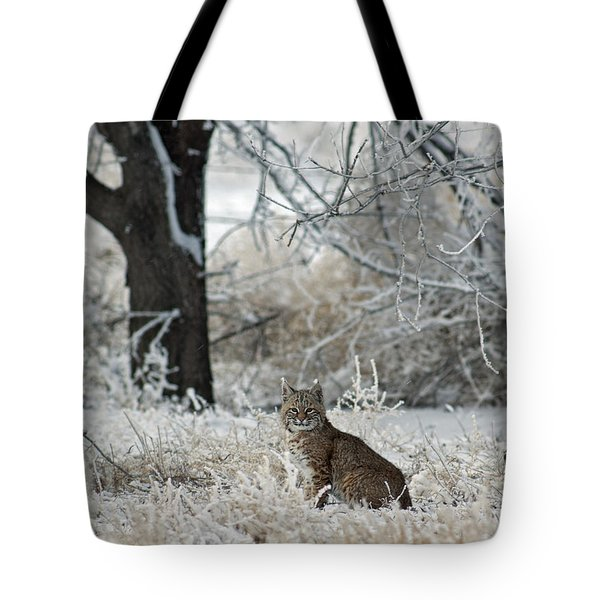 Bobcat And Heavy Frost Tote Bag by Gary Langley