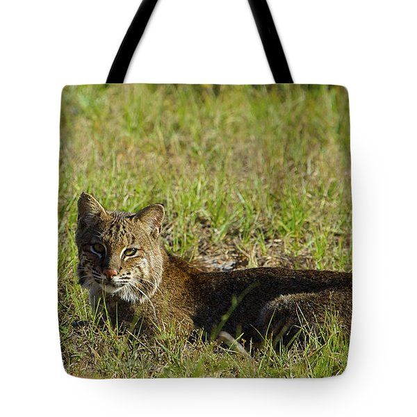 Bobcat In The Sun Tote Bag