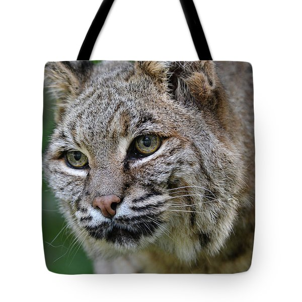 Bobcat In The Trees Tote Bag