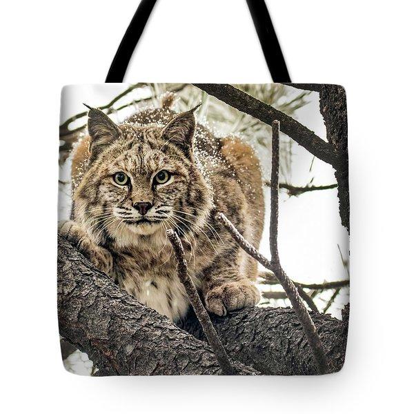 Bobcat In Winter Tote Bag