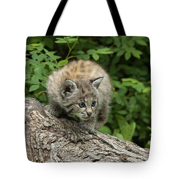 Bobcat Kitten Exploration Tote Bag by Sandra Bronstein