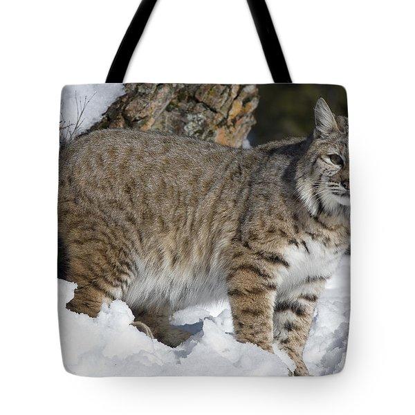 Bobcat Lynx Rufus In The Snow Tote Bag by Matthias Breiter